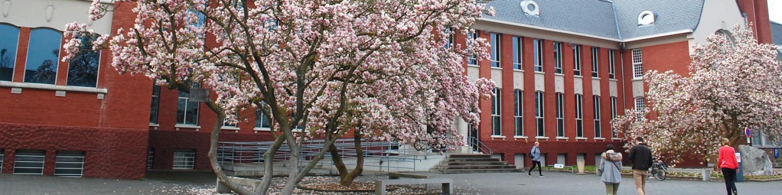 voorgevel administratief centrum Zoersel met bloeiende magnolia op de voorgrond