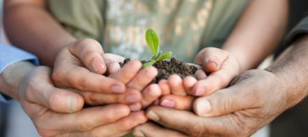 handen houden kiemend plantje vast