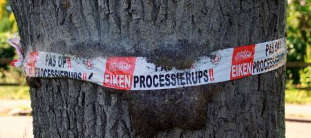 stam van boom met nest van processierupsen en waarschuwingslint