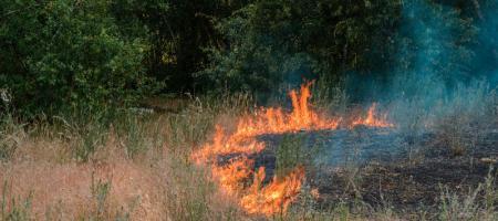 brandend gras naast struikgewas