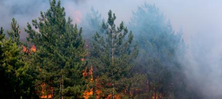 brand in bos met veel rook