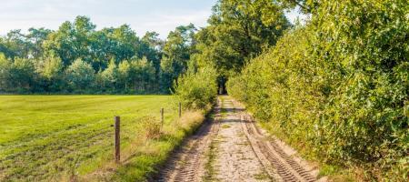 landelijke weg omringd door weiland en hagen