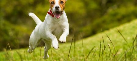 hondenlosloopzone