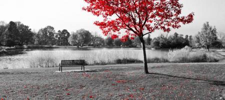 rode boom bij bank aan het water