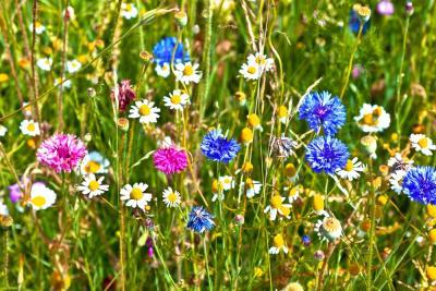 close-up van een bloemenweide in volle bloei