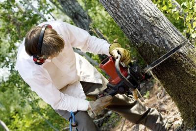 man zaagt boom om met kettingzaag
