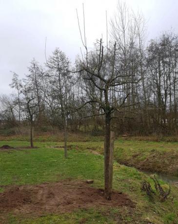 bomen aangepland in de Dwergenbergen